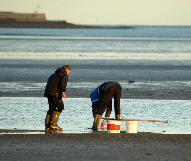 Alentours 14 - La pêche à pieds